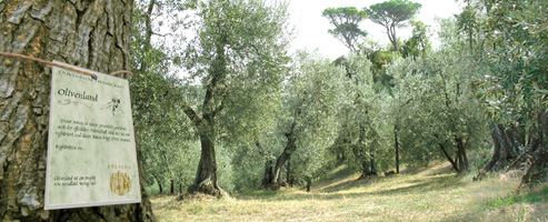 olivenbaum-banner