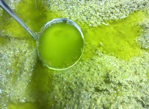 frisches-olivenoel