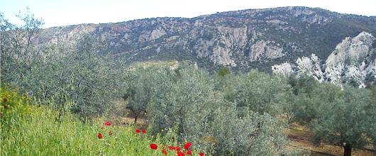 olivenhain-fruehling